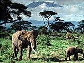 驚艷的非洲:大象,坦桑尼亞