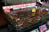 日本函館東北賞楓(二):活的帝王蟹