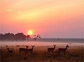 驚艷的非洲:馬賽馬拉的黑斑羚羊群,肯亞