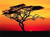 驚艷的非洲:馬賽馬拉,肯亞