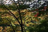 日本函館東北賞楓(三):往峽谷底部