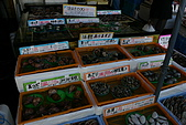 日本函館東北賞楓(二):貝類價格