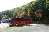 日本函館東北賞楓(三):小安峽停車場,後面幾棵楓樹開始紅了