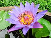 2010.06.05~08 澳門香港行,第二天 :IMG_8413.JPG