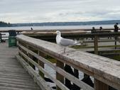201207DADDY加拿大:釣螃蟹的地方