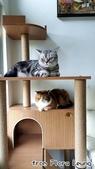 2015~2016貓咪嘗鮮《MOMOCAT》:Flora Leung03.jpg