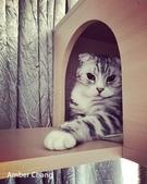 2015~2016貓咪嘗鮮《MOMOCAT》:31_Amber Chang_12.jpg