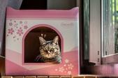 2021貓咪嘗鮮《MOMOCAT》:Jerry Lai.jpg