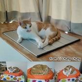 2015~2016貓咪嘗鮮《MOMOCAT》:Li Chung Chung.jpg