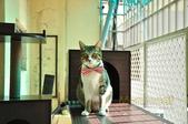 2012貓咪嘗鮮《MOMOCAT》:A06-L-1001_台南陳小姐_02.JPG