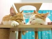 2021貓咪嘗鮮《MOMOCAT》:香港客人202106_01.jpg