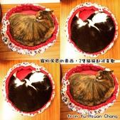 2015~2016貓咪嘗鮮《MOMOCAT》:Yu-Hsuan Chang03.jpg