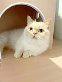 2021貓咪嘗鮮《MOMOCAT》:Emma Wan05.jpg