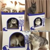 2015~2016貓咪嘗鮮《MOMOCAT》:Wendy Hau.jpg