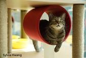 2015~2016貓咪嘗鮮《MOMOCAT》:Sylvia Hwang.jpg