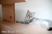 2015~2016貓咪嘗鮮《MOMOCAT》:Creami Tsui01.jpg