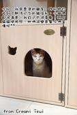 2015~2016貓咪嘗鮮《MOMOCAT》:Creami Tsui02.jpg