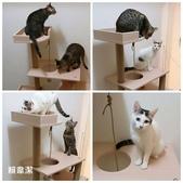 2015~2016貓咪嘗鮮《MOMOCAT》:105_賴韋潔.jpg