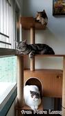 2015~2016貓咪嘗鮮《MOMOCAT》:Flora Leung02.jpg
