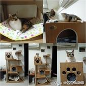 2013~2014貓咪嘗鮮《MOMOCAT》:小樂樂.jpg