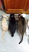 2015~2016貓咪嘗鮮《MOMOCAT》:107_郭梅鈴.jpg