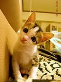 保姆貓★皮蛋:002_200506.jpg
