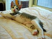 保姆貓★皮蛋:003_200506.jpg