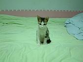 保姆貓★皮蛋:007.JPG