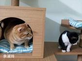 2015~2016貓咪嘗鮮《MOMOCAT》:08_余淑玲.jpg