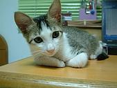 保姆貓★皮蛋:004_200507.jpg