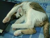 保姆貓★皮蛋:008.JPG
