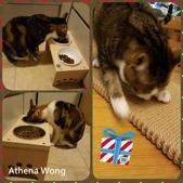 2015~2016貓咪嘗鮮《MOMOCAT》:92_Athena Wong.jpg