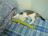 保姆貓★皮蛋:011.JPG