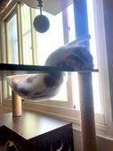 2021貓咪嘗鮮《MOMOCAT》:瑄501.jpg
