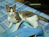 保姆貓★皮蛋:012.jpg