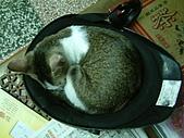 保姆貓★皮蛋:013.jpg
