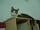 保姆貓★皮蛋:018.JPG