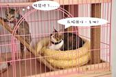 2012貓咪嘗鮮《MOMOCAT》:G06-998_台南陳小姐_01.JPG