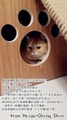 2015~2016貓咪嘗鮮《MOMOCAT》:Hsiao-Ching Shin02.jpg