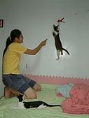 保姆貓★皮蛋:016.jpg