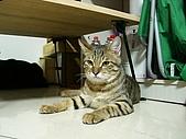 卸任中途貓:018.JPG
