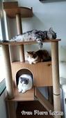 2015~2016貓咪嘗鮮《MOMOCAT》:Flora Leung01.jpg