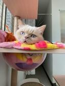 2021貓咪嘗鮮《MOMOCAT》:Emma Wan03.jpg