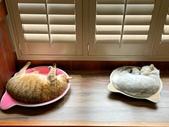 2021貓咪嘗鮮《MOMOCAT》:Hsiang Hsiang Chen01.jpg