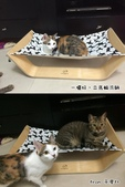 2015~2016貓咪嘗鮮《MOMOCAT》:于厚比01.jpg
