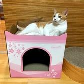 2021貓咪嘗鮮《MOMOCAT》:林昭妤01.jpg