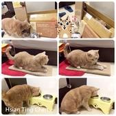 2015~2016貓咪嘗鮮《MOMOCAT》:89_Hsian Ting Chen.jpg