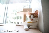 2015~2016貓咪嘗鮮《MOMOCAT》:Creami Tsui06.jpg