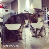 2015~2016貓咪嘗鮮《MOMOCAT》:104_Amber Chang.jpg