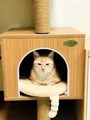 2021貓咪嘗鮮《MOMOCAT》:carol198210_03.jpg